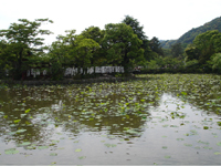 0505_kamakura01